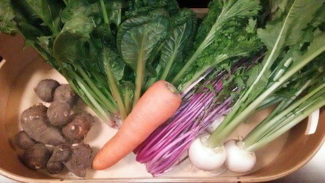 宅配食材 わんまいるのこだわり国産野菜