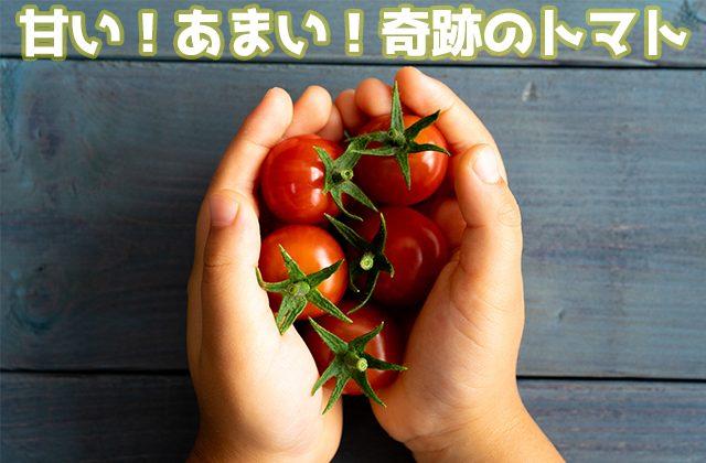 フルーツみたいな甘いミニトマト。トマト好き・トマト嫌い